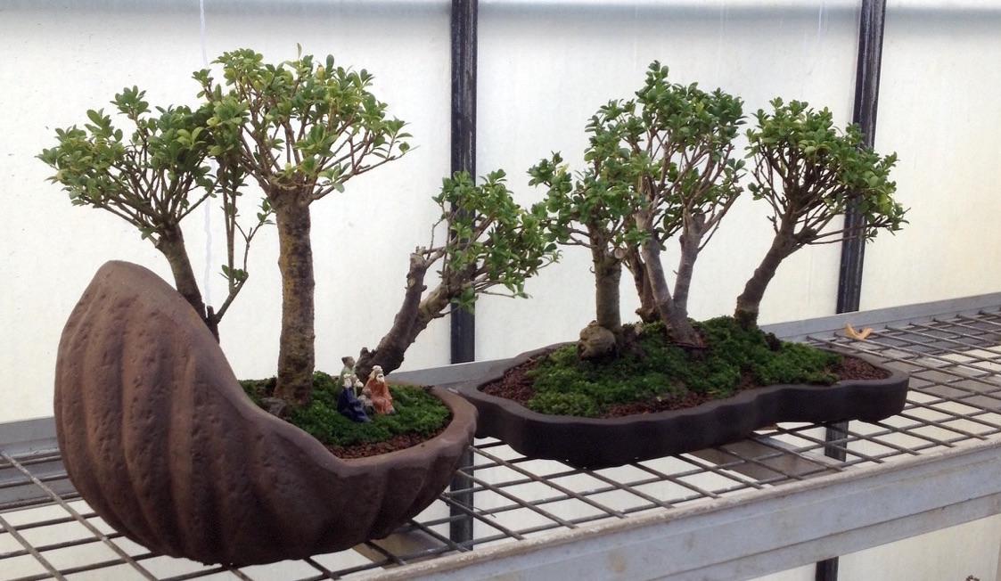 Forêts de houx tropicaux